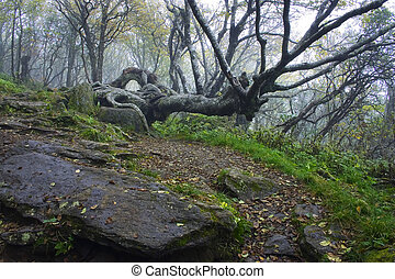 Gnarly Tree in Craggy Gardens - Tree in Craggy Gardens on...