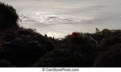 close shot of ocean and tidepool