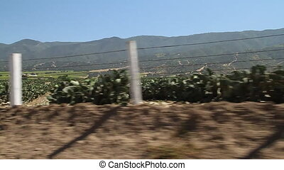 driving through cactus farm