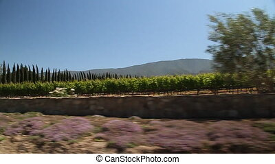 driving through California wine country with gate to estate