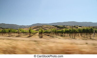 driving through California wine country