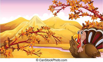 A turkey in an autumn view