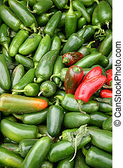 Jalapeno Peppers - A large group of pretty Jalapeno peppers