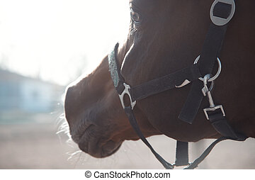 Single horse - Close-up portrait of the horse with bridle...