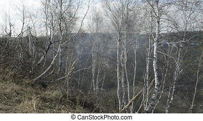Spring landscape with birch trees, buildings and fire