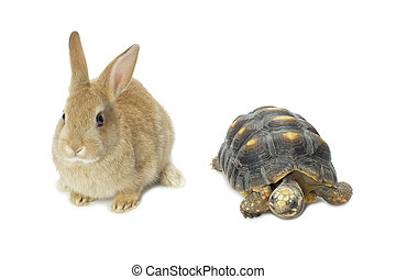 rabbit and turtle - Close up image of rabbit and turtle...