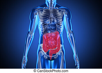 Digital blue human with highlighted digestive system on blue...