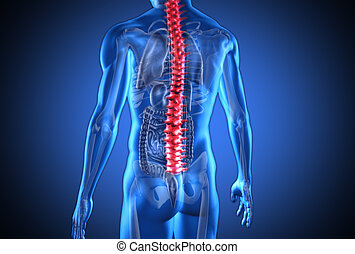 Digital blue human with highlighted red spine and visible...