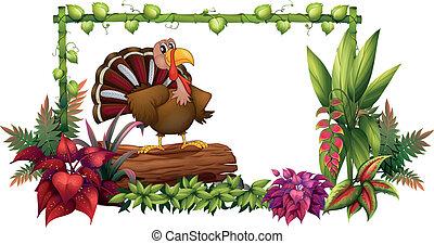 A turkey in the garden