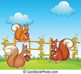 Squirrels at the garden - Illustration of squirrels at the...