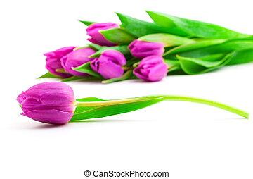 Bunch of tulips on white background,