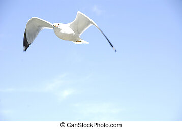 Lonesome Gull - A single seagull soaring in the wind