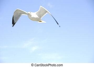 Solitário, gaivota