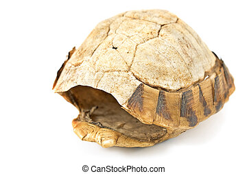 Tortoise turtle shell - Tortoise turtle shell isolated on...