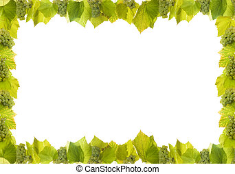 frame made from white wine grapes on white