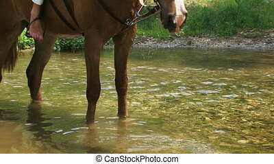 Horse drinking from a river