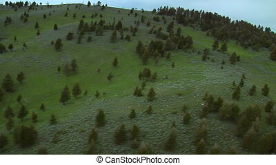 Aerial shot of grassy hillsides dotted with sage and pine