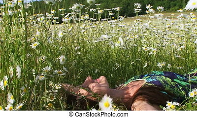 Among daisies. Close-up