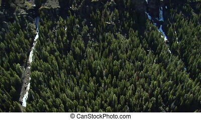 Aerial shot of dense pine forest and rocky side of mountain
