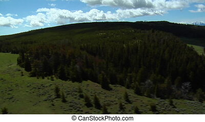 Aerial shot of Montana pine forest and grassy plain