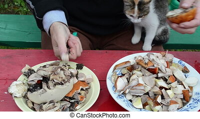 knife cut mushroom cat