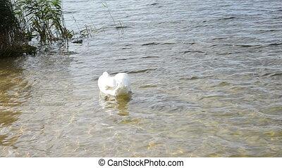 swan lake look food