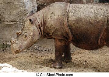 Rhinoceros - Beautiful photo of a rhinoceros