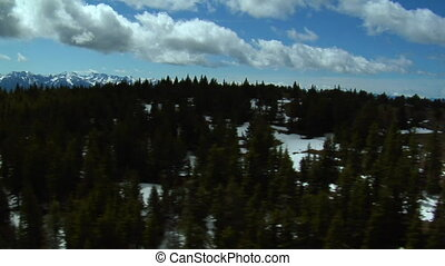 Aerial shot of pine trees in Paradise Valley Montana