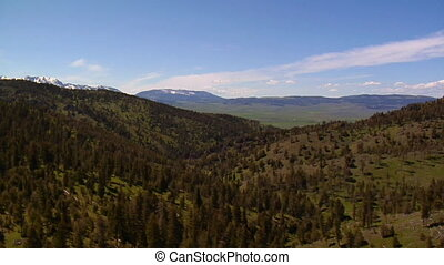 Aerial shot of mountain pine trees