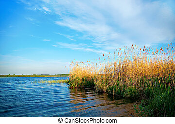 lake with reeds - Beautiful lake with reeds on summer day