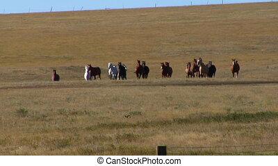 Horses run across Wide field