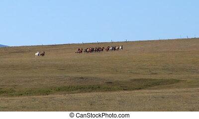 cowboys gather in Dawn Meadow