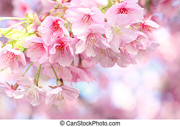 Kawazu Cherry tree in Japanese spring