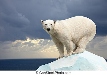 polar bear against sea landscape - polar bear in wildness...