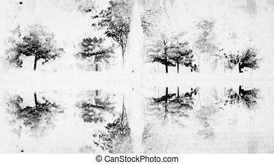 Woods reflection in calm water