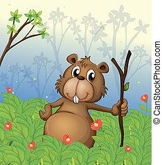 Un, castor, tenencia, madera, selva