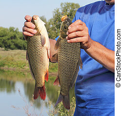 carp in the hand of fisherman against the river