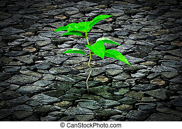 Small plant growing from a stone pavement