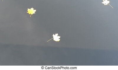 lake water tree leaves