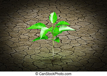 Small plant growing from earth - Small plant growing from...