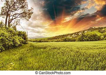 Spring colors of Tuscany - Meadows and Hills