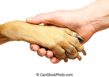 Handshake - Dog paw and human hand doing handshake. Isolated...