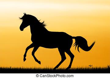 Running horse - Silhouette of running horse on sunset...
