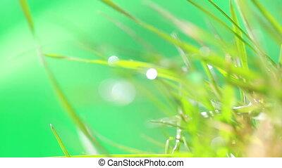 Dewdrop on grass