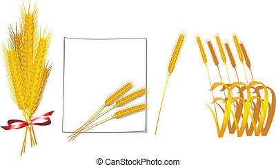 Bunch of wheat vector - bunch of wheat ears isolated on...