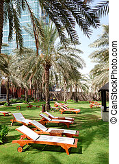 Sunbeds on the green lawn and palm tree shadow in luxury...