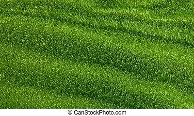 Slowly waving grassy background