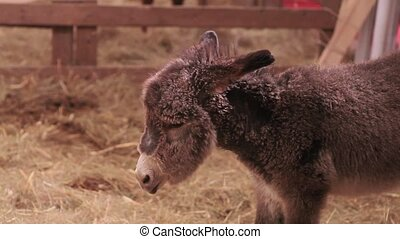 Young donkey - Photo of Young donkey in the farm