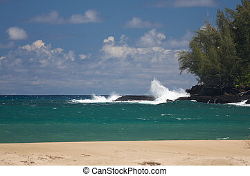Tropical Shoreline and Trees