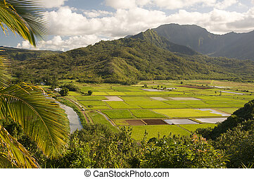 Hanalei Valley and Taro Fields on Kauai, Hawaii